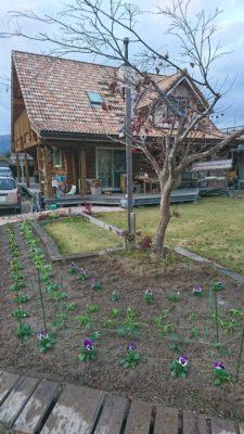 春用の苗、植えました