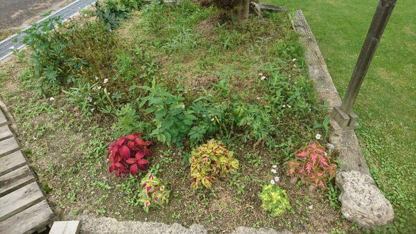 見苦しい花壇
