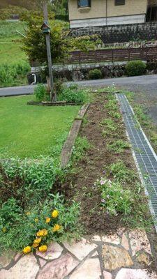 雨の合間に草抜き